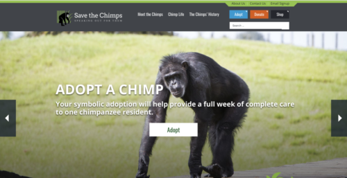 save the chimps interview
